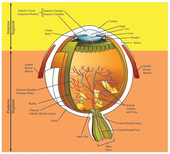 Managing Glaucoma Best Practices For Enhancing Patient Adherence